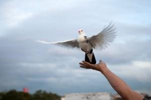 Woajck_Pigeon_30