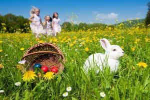 Catching-Rabbit-On-v