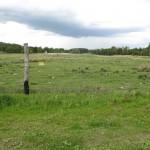trawka się zieleni dla skubania jeleni (danieli)