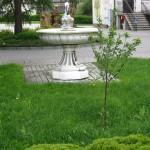 wiśnia - symbol gminy
